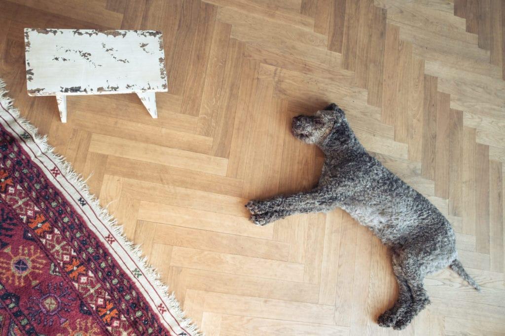 Simone-Schneider-Hundetraining-KURSRuhe
