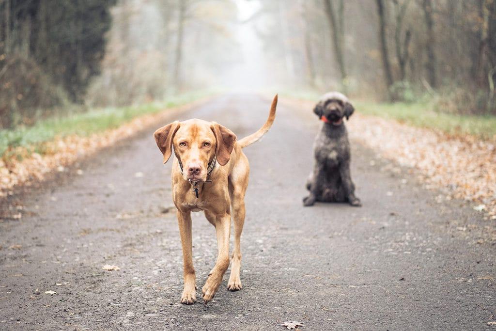 Simone-Schneider-Hundetraining-Erziehung