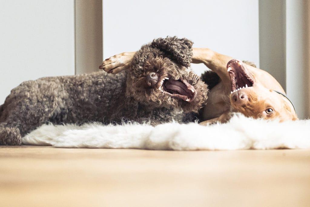 Simone-Schneider-Hundetraining-Junghunde