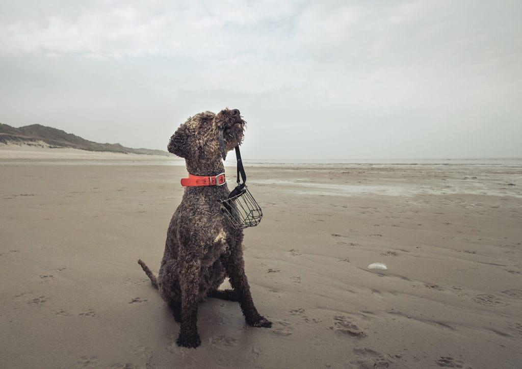Simone-Schneider-Hundetraining-Sachkunde