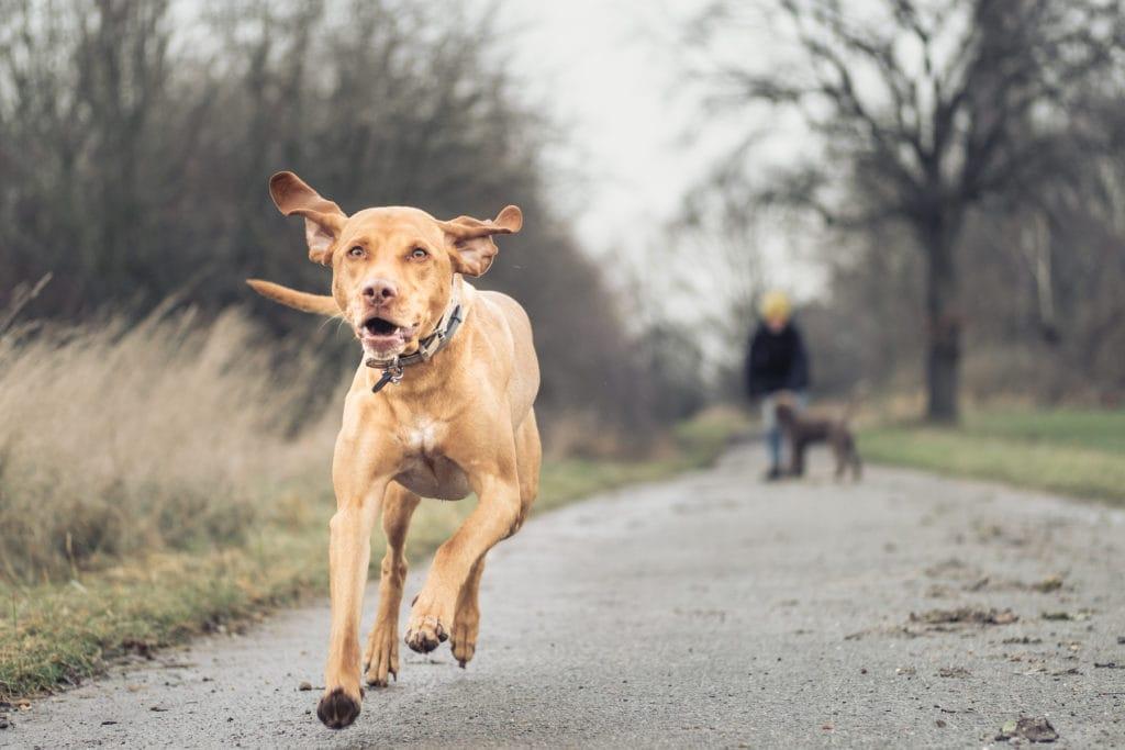 Simone-Schneider-Hundetraining-Workshop-DerverbindlicheRueckruf