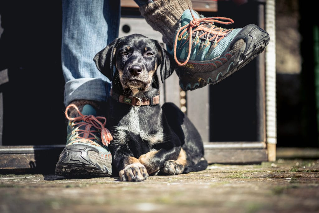 Simone-Schneider-Hundetraining-Welpen-Ellie